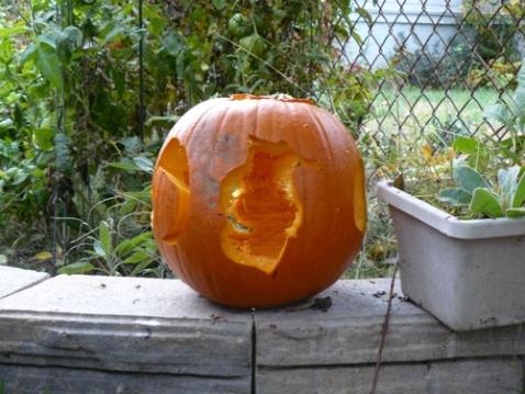 pumpkin_irr